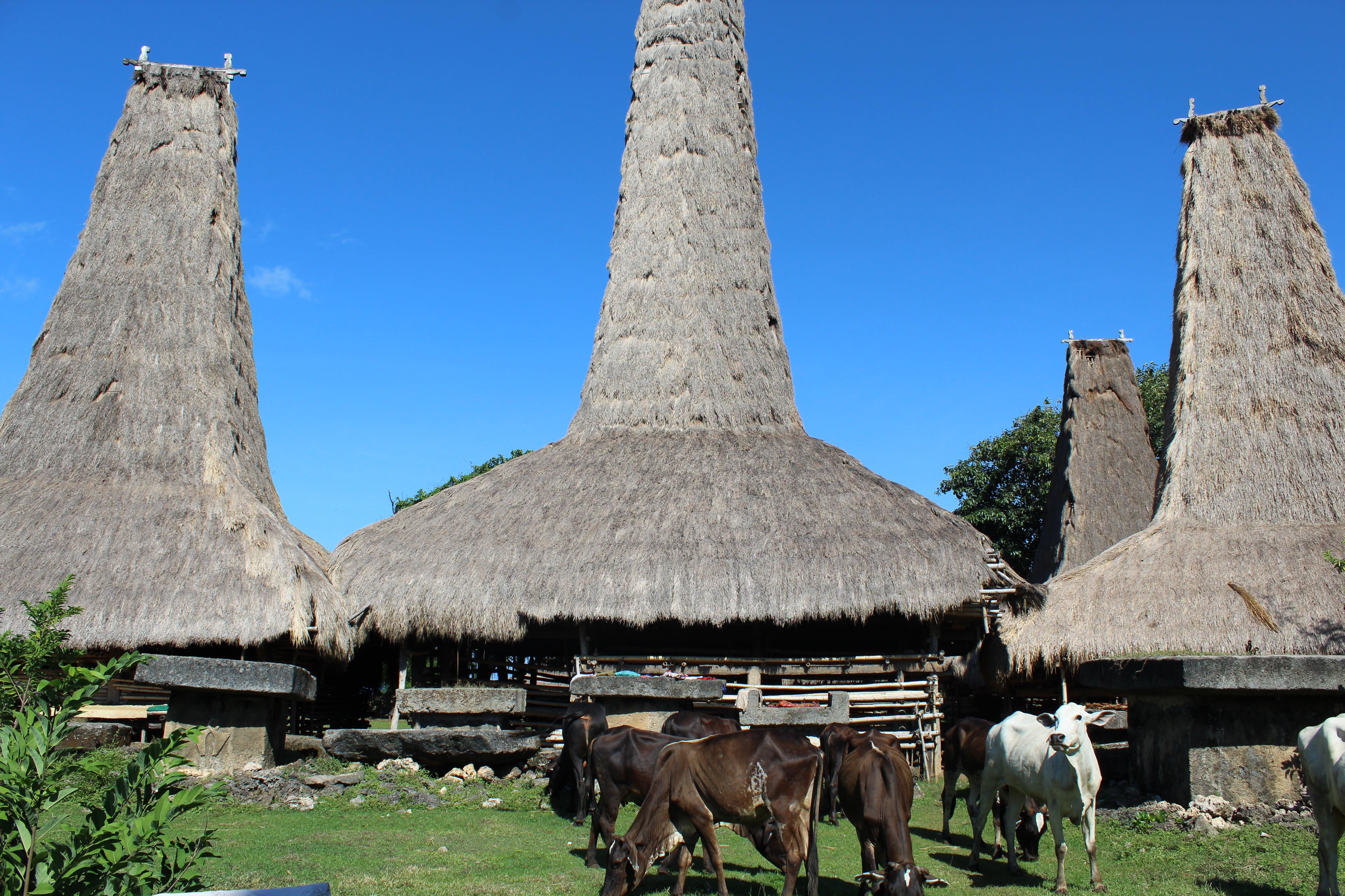 sumba village